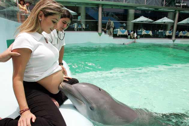 Homodolphinus: szülés delfinekkel (videóval!)
