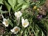 Tavaszodik