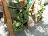 Vertikális kertészkedés